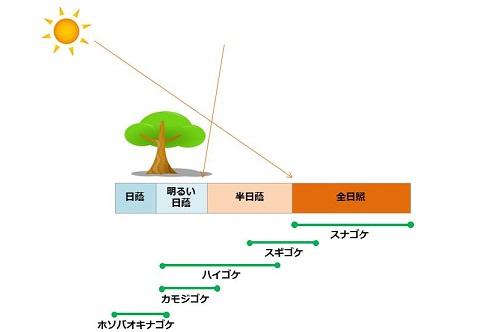 「日照条件 苔」の画像検索結果