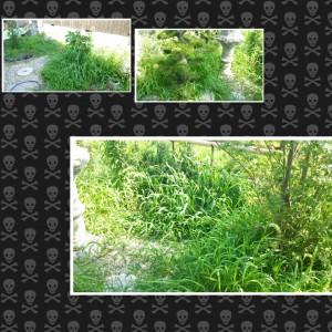 wpid-photogrid_1374397472029.jpg