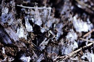 霜柱は苔にとって天敵